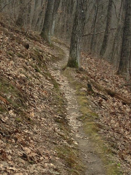 This is the Cistern Trail.  It is the main connector between the Wildwood Loop on top, and the Low Rollers at the bottom.  Expert riders climb Cistern and descend on the Quarry.  Intermediate Riders will generally descend on the Cistern trail, so be aware of two-way traffic.