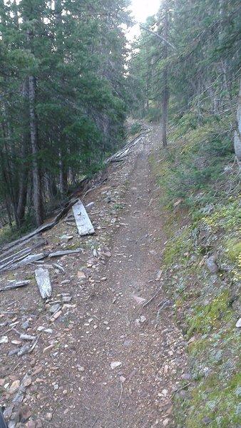 Sweet singletrack - Great Flume Trail