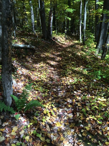 Perfect autumn conditions on Namakagon.  Although difficult to see the trail with all the colorful leaf litter.