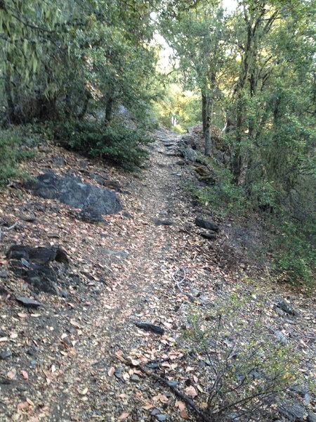 Along the Elliott Ridge Trail