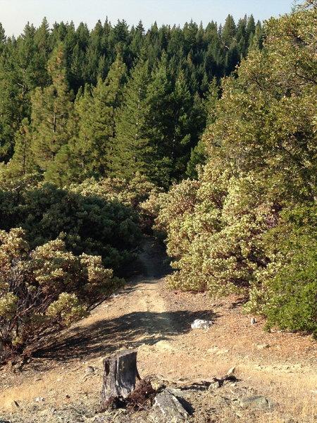 Mixed forest along Elliott Ridge Trail