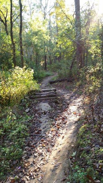 Log pile on Runaround Left Trail