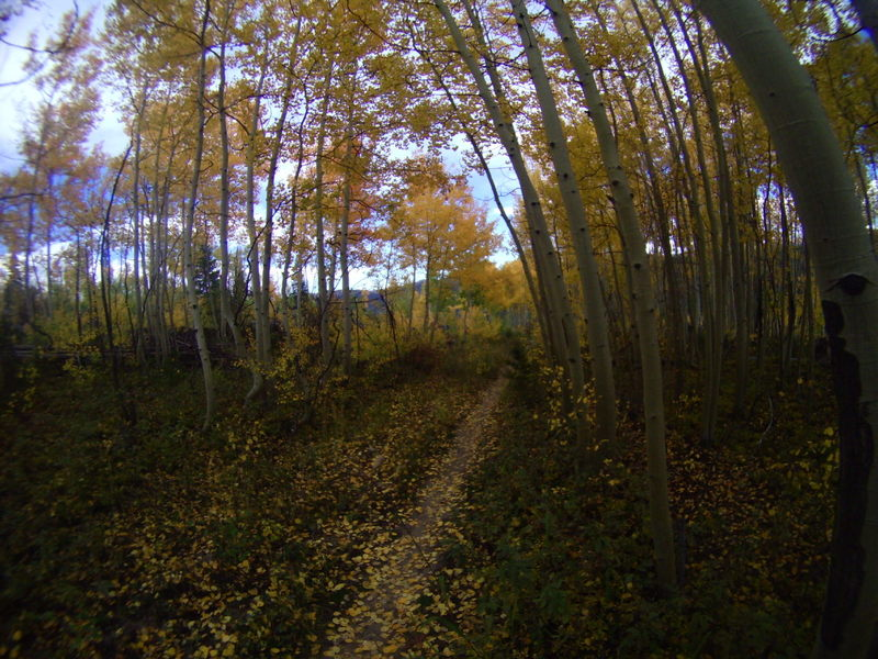 Evening ride with Aspen leaves falling on our heads! On Leap Frog Trail