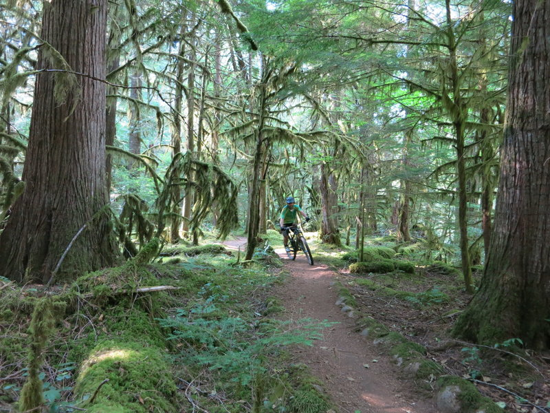 The smooth and fast lower MRT- McKenzie River Trail