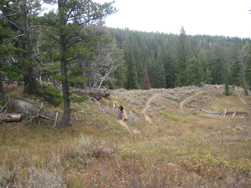 Start of a fun section of switchbacks on Arrow Trail