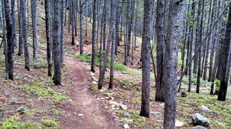 Breckenridge Peak 8 on Dwight's