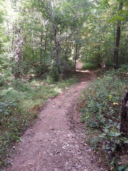 Flowy section of the Woodbrook Trail
