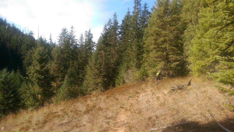 Meadow!  Trail 257C