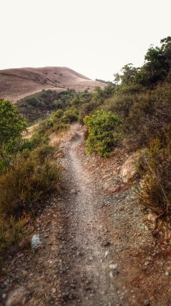 White's Hill, Wagonwheel Trail section. (facing NW or clock-wise direction)