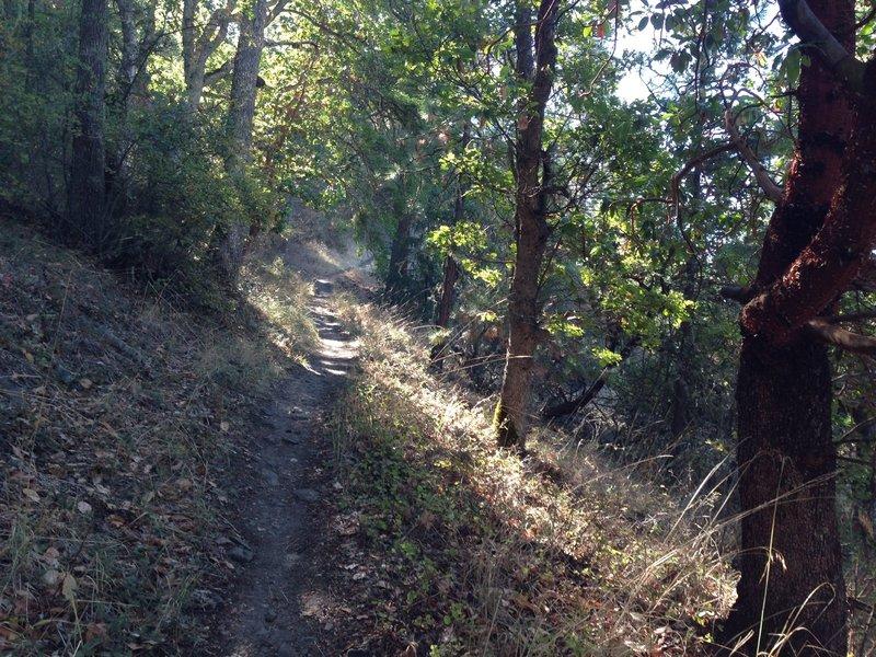 Ponderosa trail on Roxy Ann