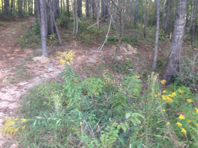 This spot can be confusing when returning to the trailhead.  The fire road is to the left (or straight) and the trail is to the right.