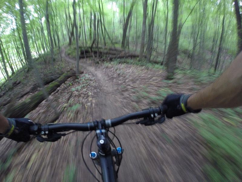 Coasting through the trees in Fanshawe Lake Park!