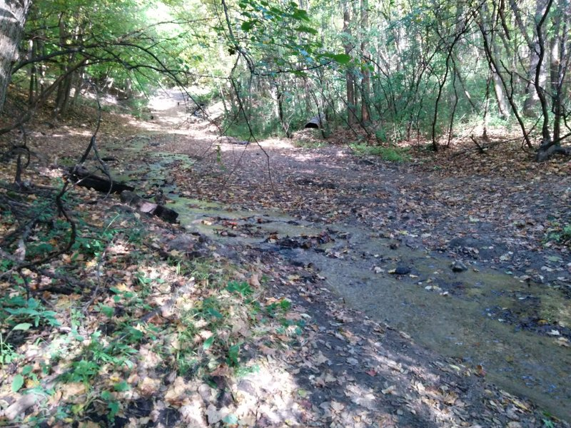 When you get to this creek, take the trail leading to the top of the photo. Across the creek is off limits.