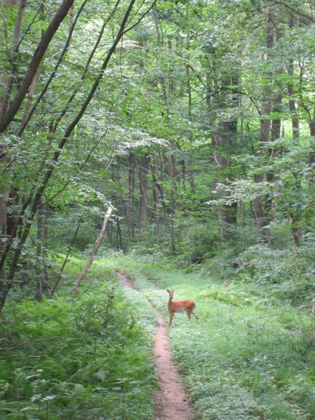 Deer sighting.