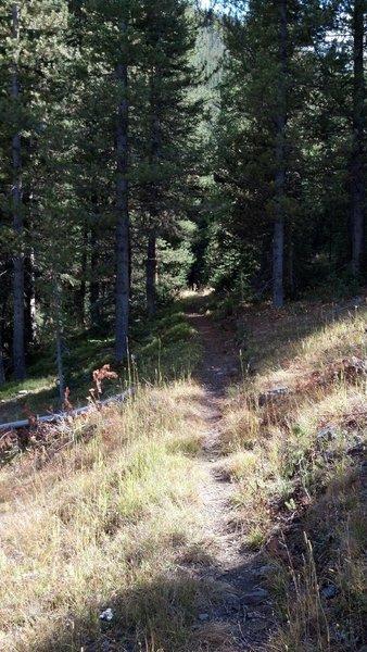 Rock Creek Trail is 100% singletrack.