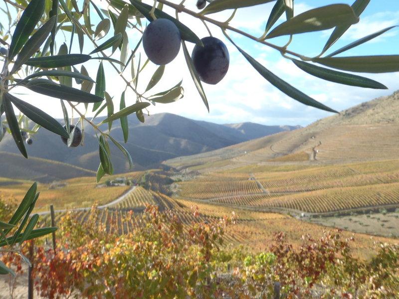 Olivar y viñedos