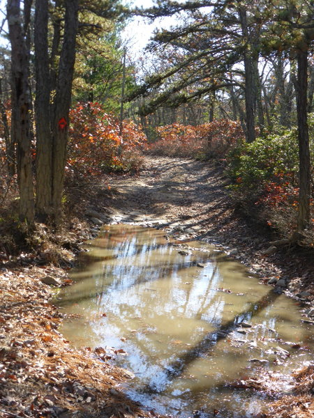 GWNF Forest RT 162, first puddle of several at top of ridge