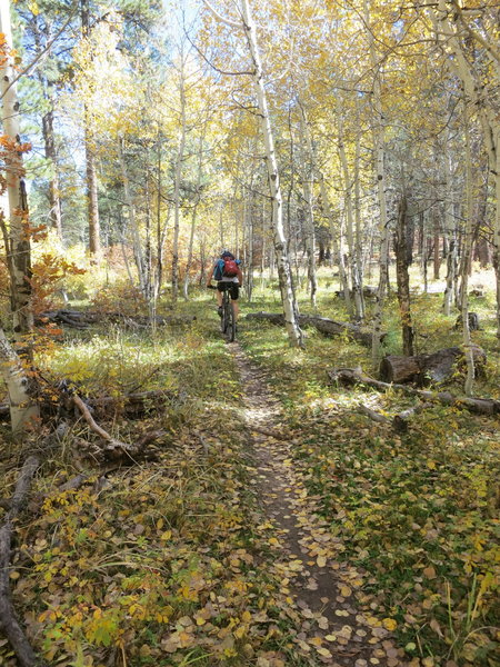 In the aspens near the start of the climb on Bean Canyon.