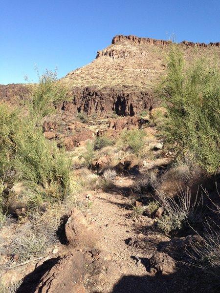 Where the Tech Ridge trail tightens