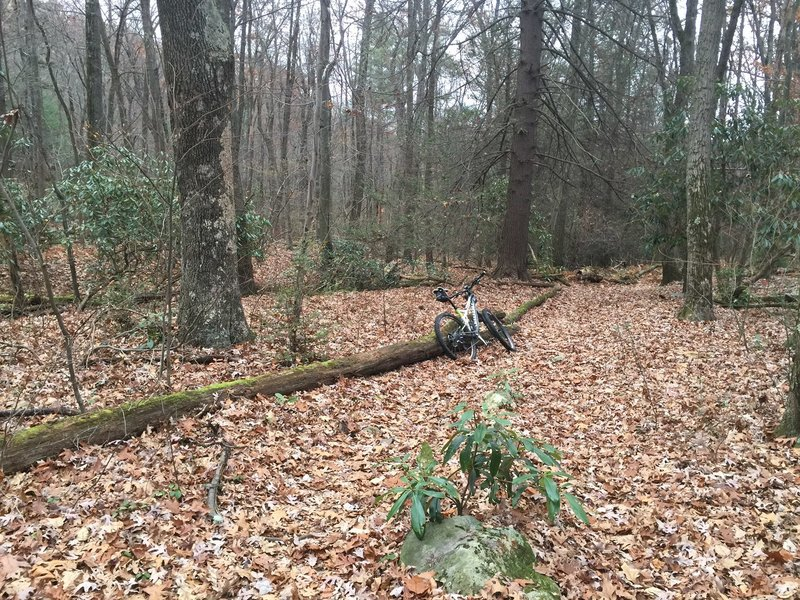 Follow the log down hill