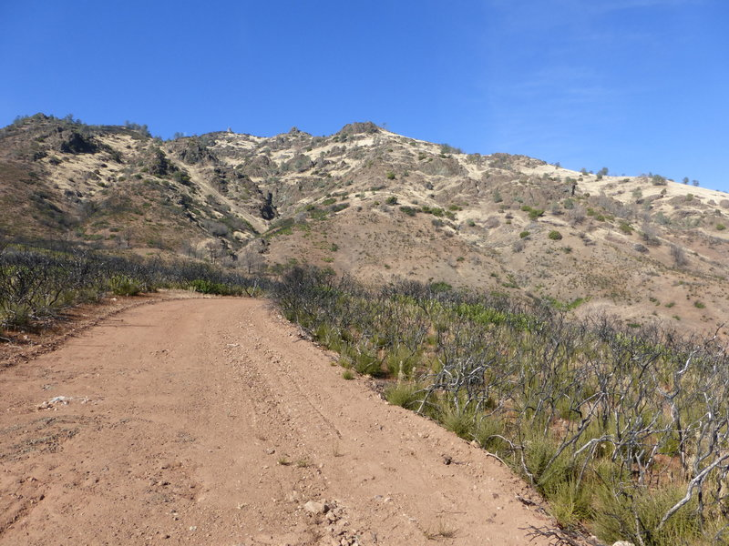 A barren landscape that is recovering from fire- on Rhine Canyon Rd