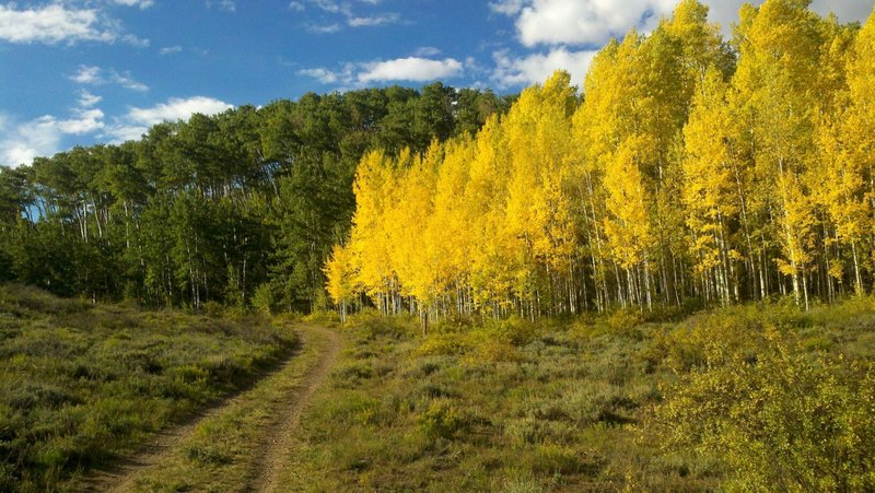 Lupine trail in the fall