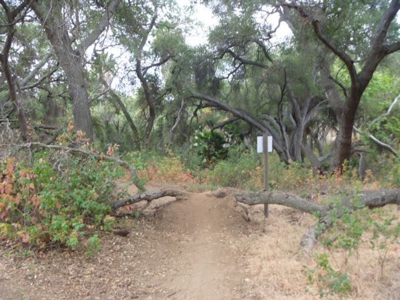 Upper easement trail.