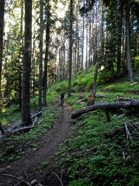 Descending the eastern most trail