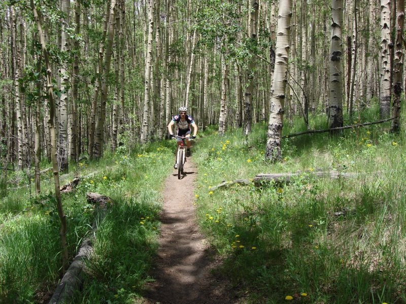 East side of Kenosha Pass has some very nice aspen cut throughs on the Colorado Trail as well.