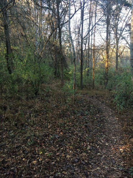 Smooth singletrack on Bottom Out Trail