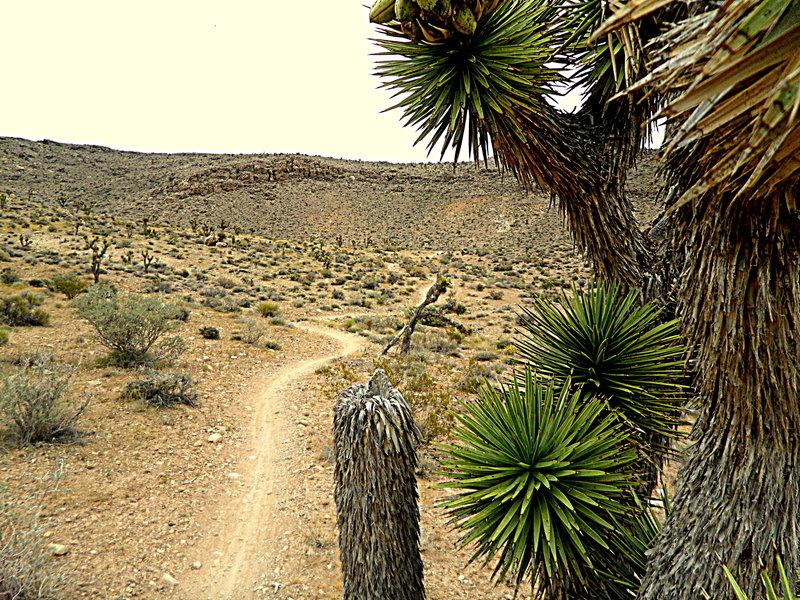 Landmine Loop terrain
