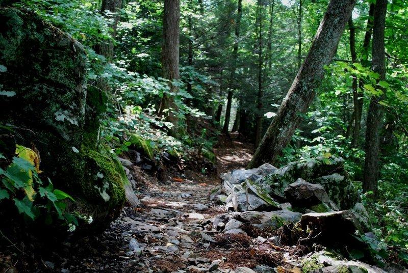 Rocky Branch Trail