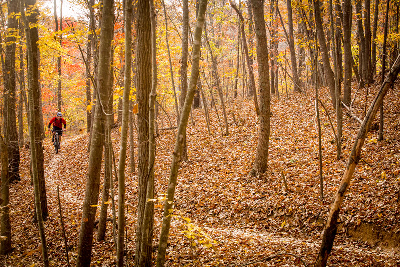 Fall colors at Chicopee Woods