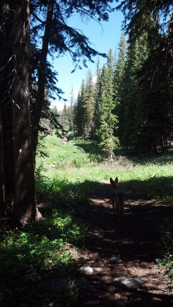 Dog sees Moose...Rider pauses to reflect.