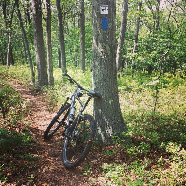 Blue Blaze Trail