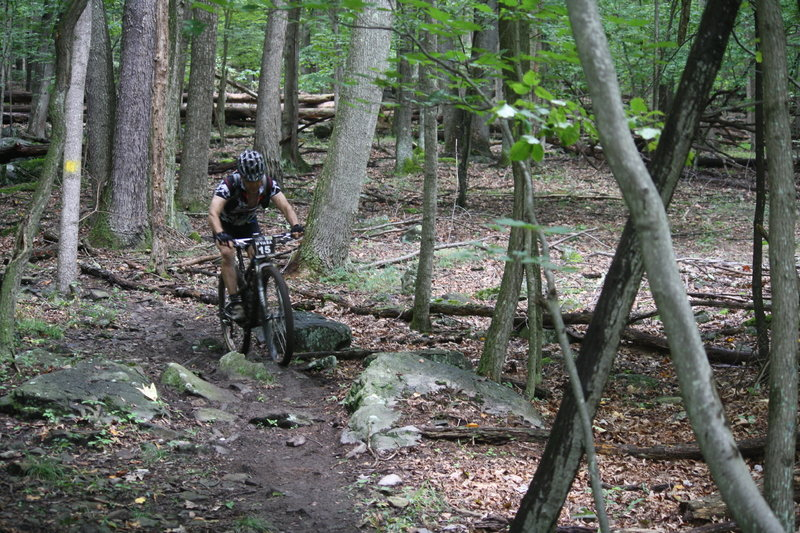 Bottom of Rocky Trail