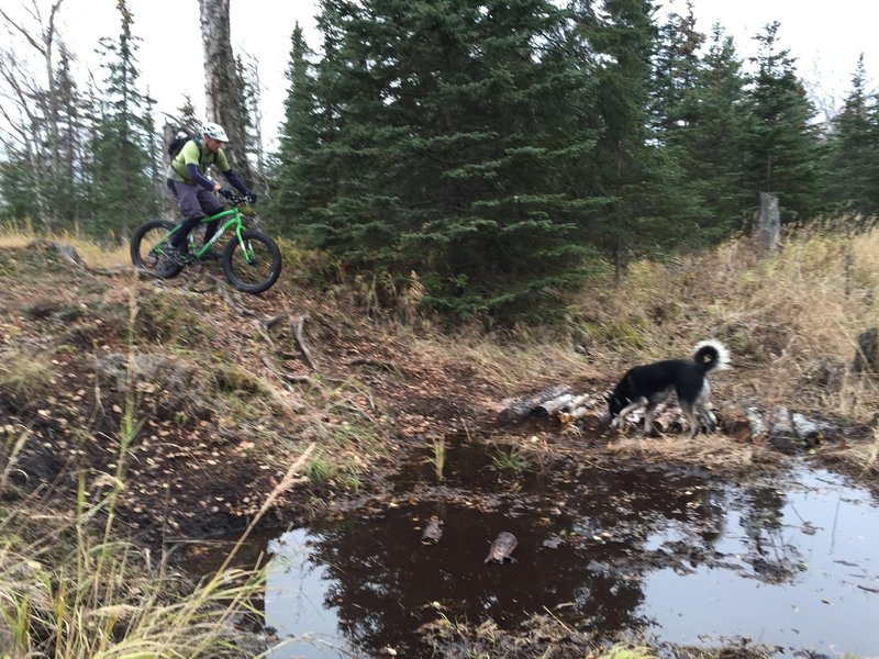 """Root dropoff and a homemade log """"bridge"""" across a particularly wet spot on Speedway Trail"""