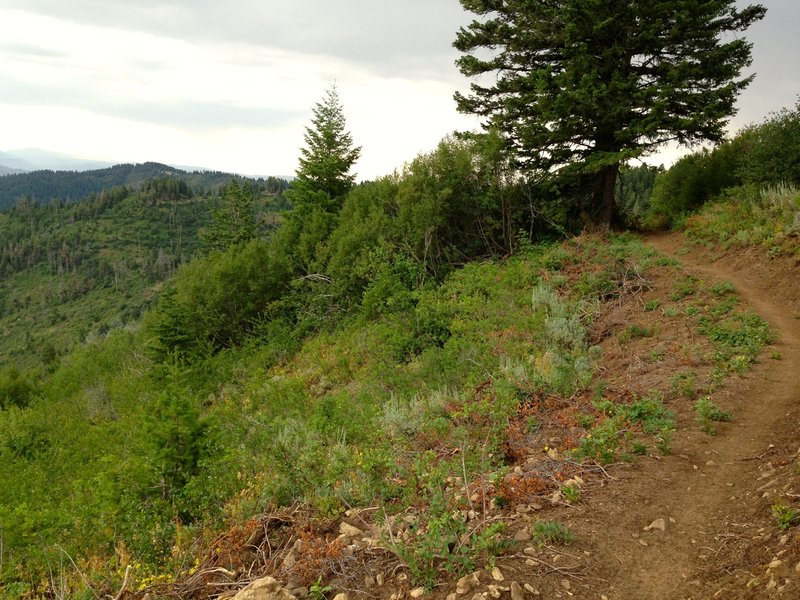 Prime singletrack on Around the Mountain Trail, looking West (counterclockwise).