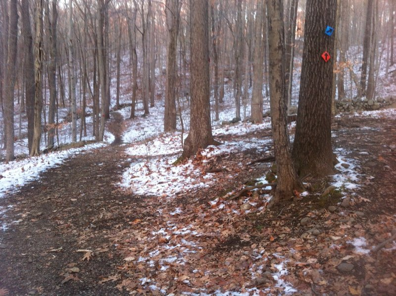 The intersection between Orange Trail and Blue Trail at Trout Brook Valley.