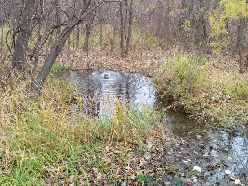 Artesian well just off the trail where the singletrack meets doubletrack.