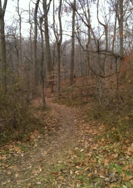 Blue trailhead.  Blue trail has some steep, rocky climbs and fun, rocky downhills.
