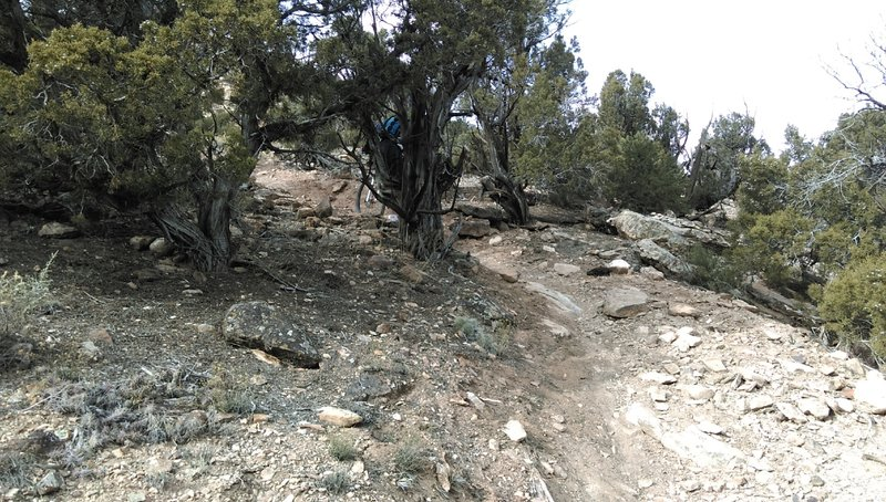 Climbing the hike-a-bike section of Cushman Creek Trail