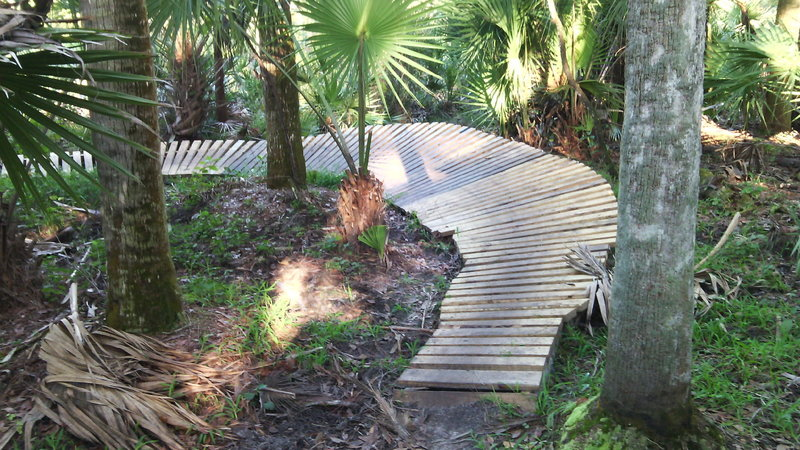 Wooden bridge feature between palm trees on River Loop Trail