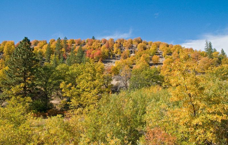 Oaks on Paiute Creek Trail