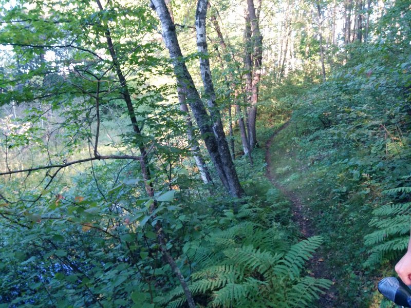 Trail abounds with verdant foliage