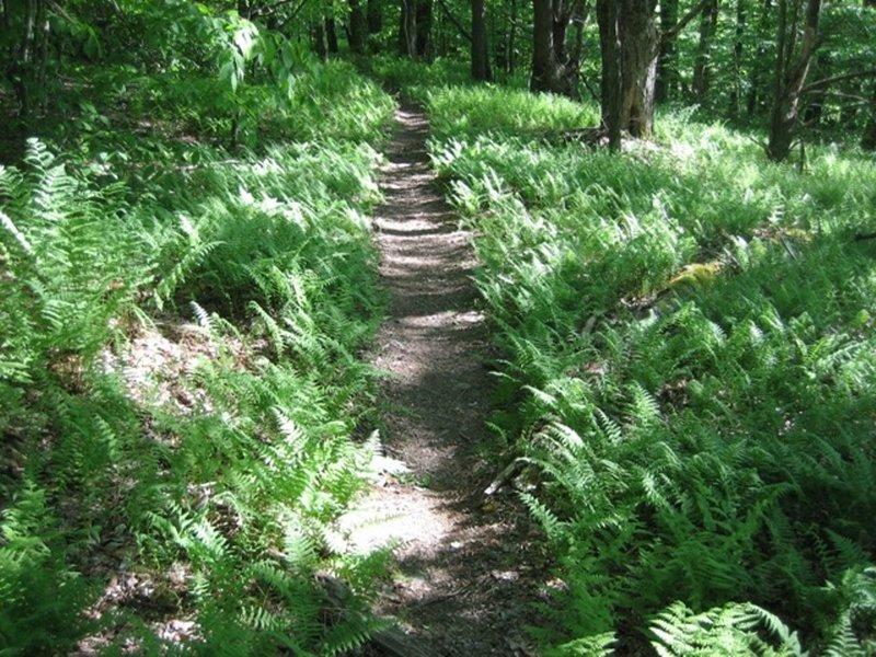 Sweet, sweet singletrack on the IMBA Trail (B4).