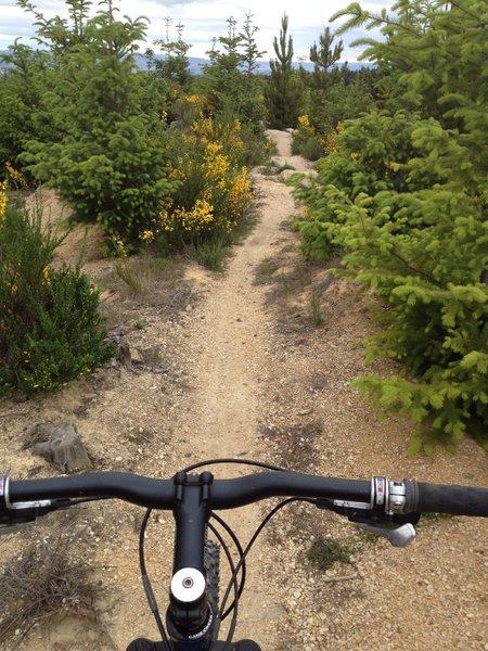 Somewhere on Blu Man Trail