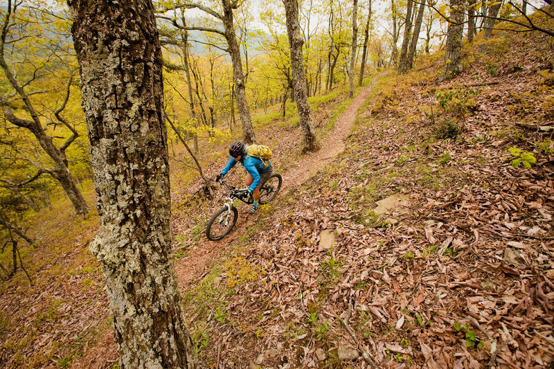 Bald Ridge Trail is one long, weet singletrack descent from the intersection with Bridge Hollow.