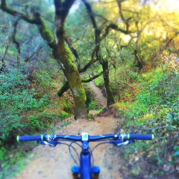 Super fun and interesting downhill! Mossy and heavy vegetation. Great flow to the trail.