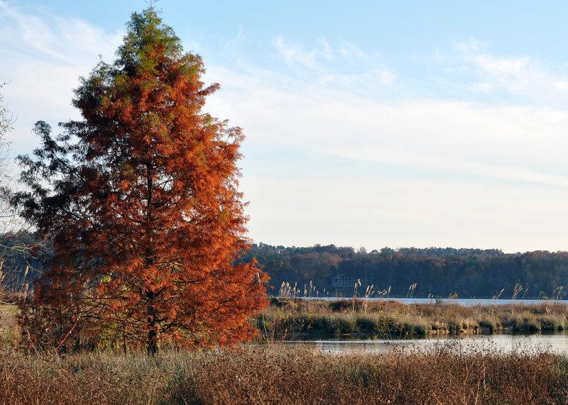Fall colors at Lake Crabtree